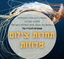 Jellyfish photo contest in Israel